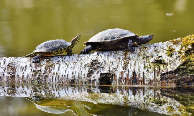 Das Handelssystem der Turtle Trader